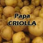Papa-criolla1-150x150 ¿Qué PAPA utilizar?