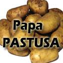 Papa-pastusa-125 ¿Qué PAPA utilizar?