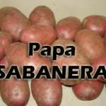 Papa-sabanera1-150x150 ¿Qué PAPA utilizar?