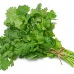 cilantro-hierba-150x150 Hierbas indispensables en la cocina