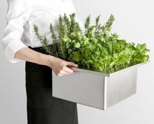 toyo-4-300x243 Hierbas y Hortalizas Frescas Cultivadas en la Cocina?
