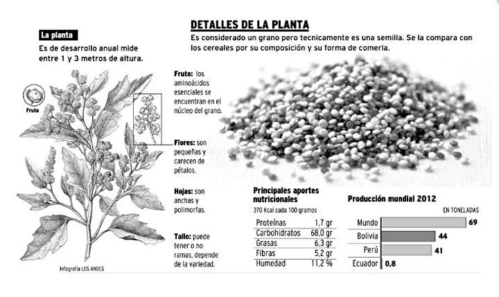 Quinoa-planta Ensalada de Quínoa y Verduras | Fácil - Rápida y Saludable Ensalada de Quinua