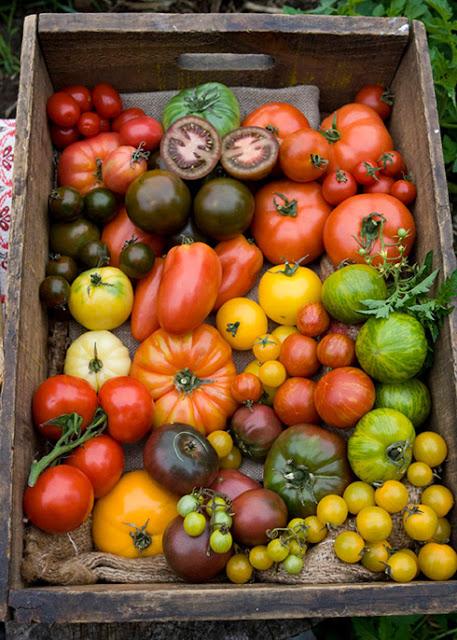 Que tomate Utilizar