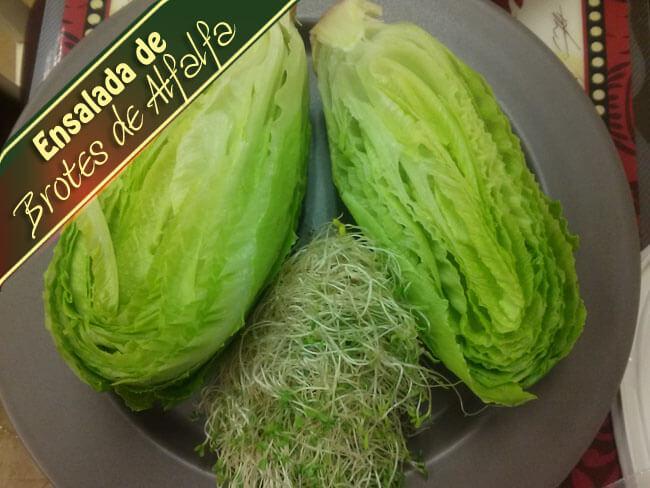 Ensalada-de-Brotes-de-Alfalfa-1 Ensalada De Brotes De Alfalfa | Que Hay Para Cocinar